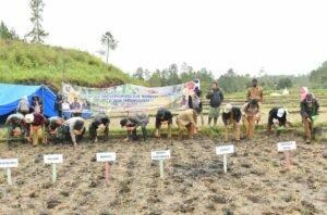 Bupati Humbahas dan Forkopimda Tanam Jagung di Desa Parsingguran II, Pollung